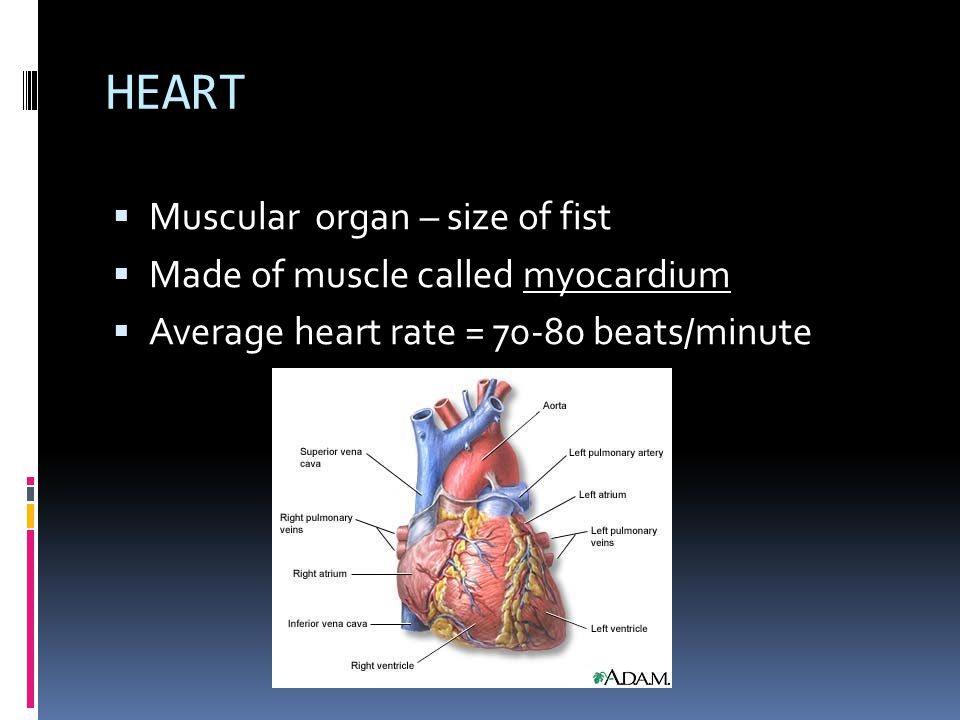 Composed of the heart and all the blood vessels of the body.