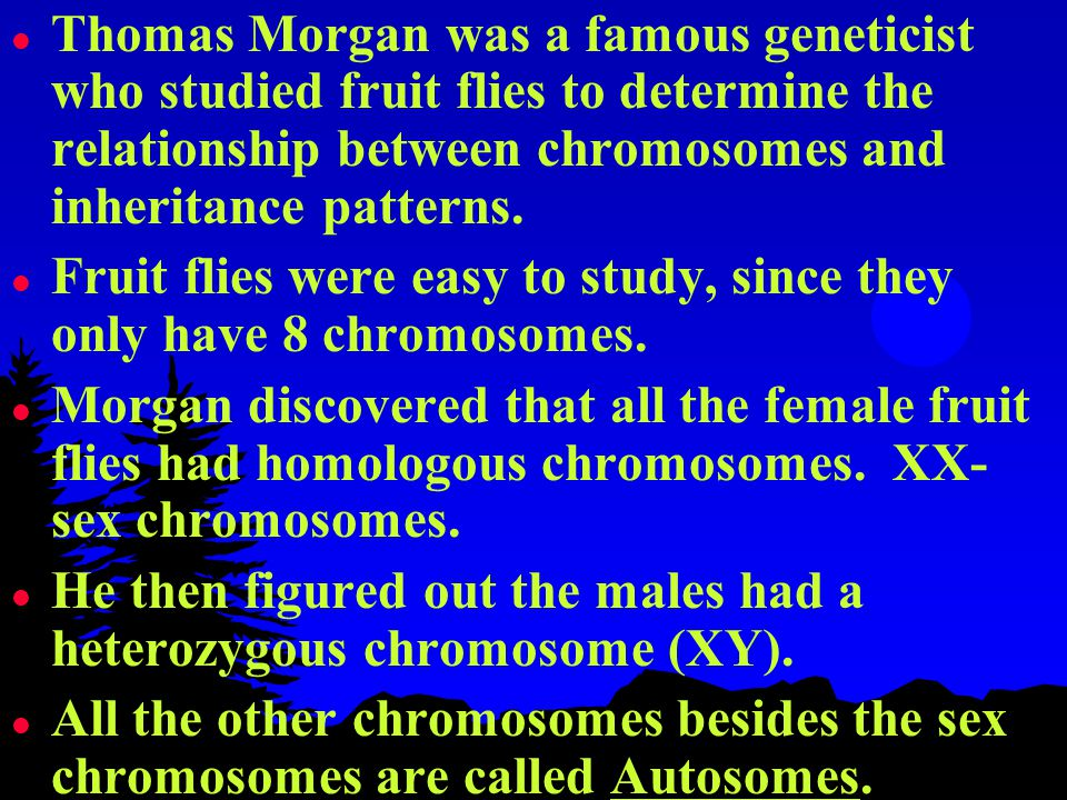 lTlThomas Morgan was a famous geneticist who studied fruit flies to determine the relationship between chromosomes and inheritance patterns.