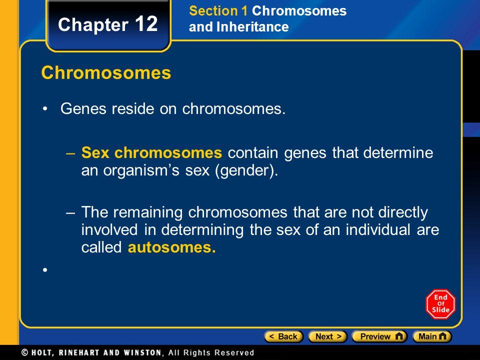Chapter 12 Chromosomes Genes reside on chromosomes. –Sex chromosomes contain genes that determine an organism's sex (gender). –The remaining chromosom