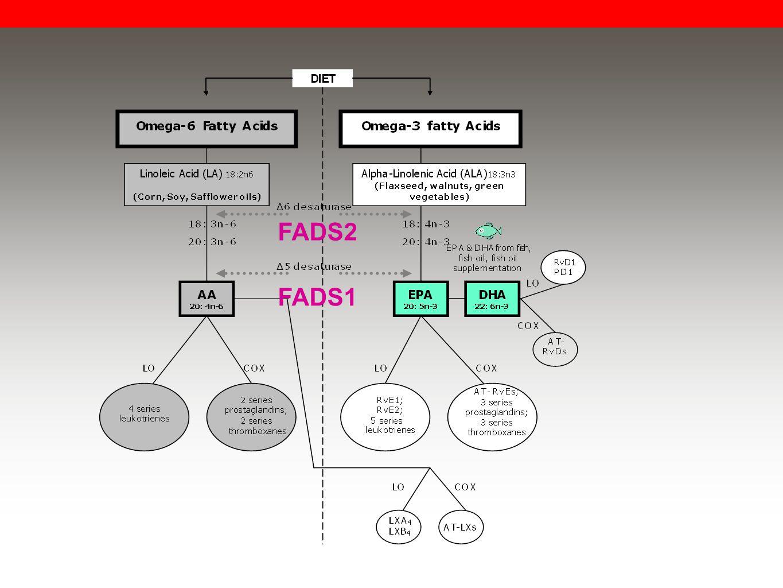 FADS2 FADS1