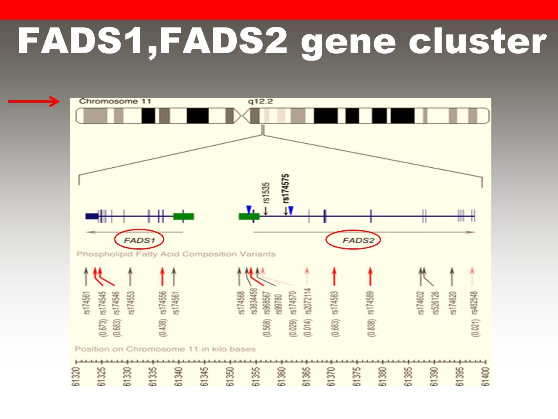 FADS1,FADS2 gene cluster