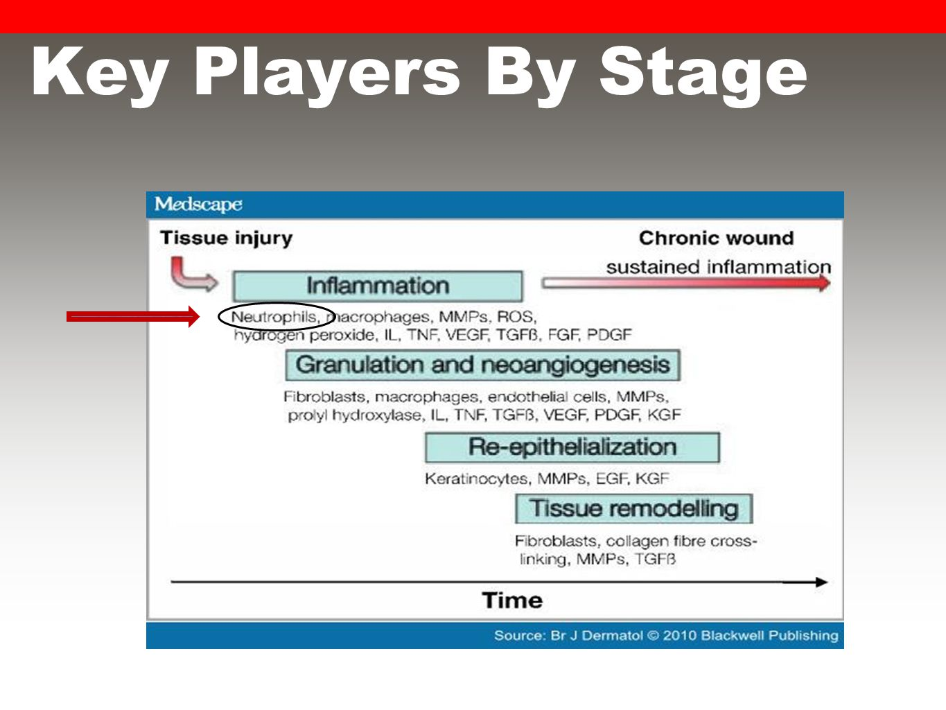 Key Players By Stage