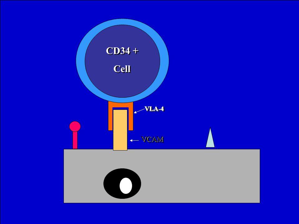 VLA-4VLA-4 VCAMVCAM CD34 + Cell CD34 + Cell