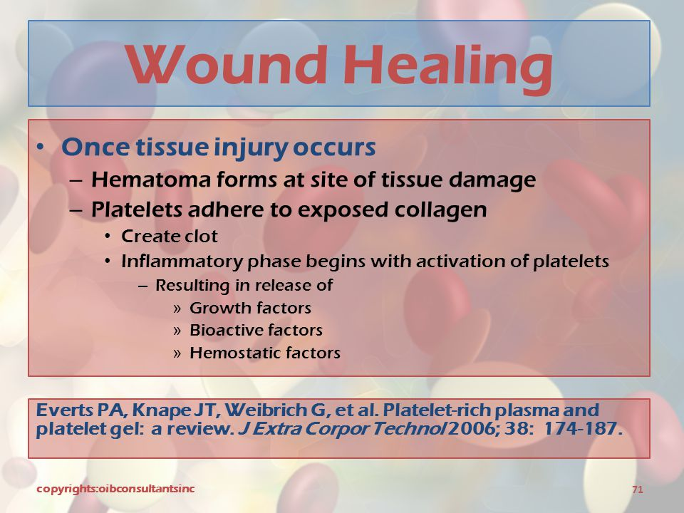 Wound Healing Once tissue injury occurs – Hematoma forms at site of tissue damage – Platelets adhere to exposed collagen Create clot Inflammatory phas