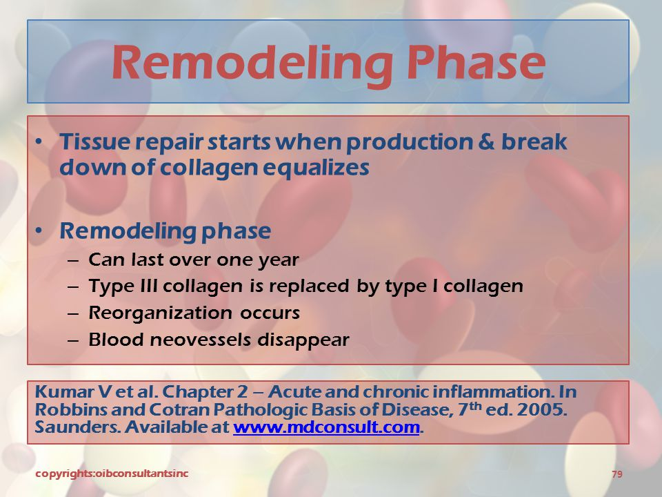 Remodeling Phase Tissue repair starts when production & break down of collagen equalizes Remodeling phase – Can last over one year – Type III collagen