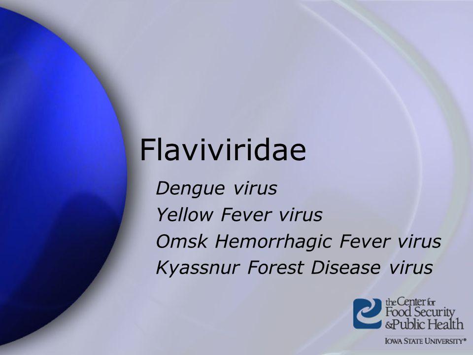 Flaviviridae Dengue virus Yellow Fever virus Omsk Hemorrhagic Fever virus Kyassnur Forest Disease virus