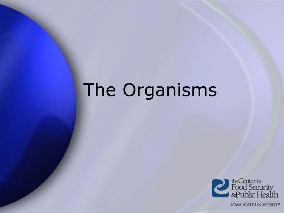 The Organisms