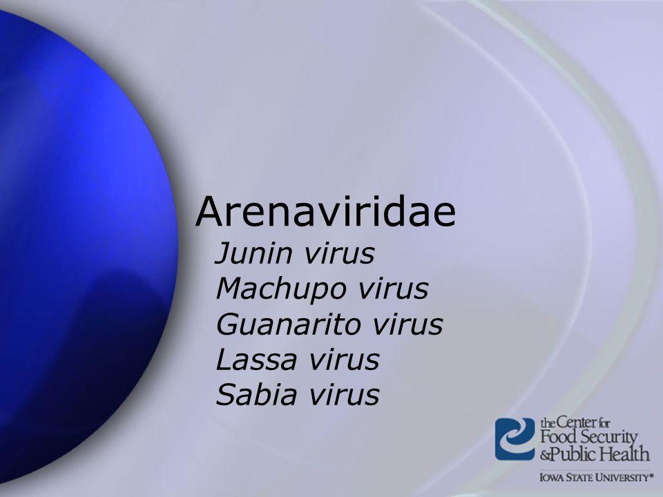 Arenaviridae Junin virus Machupo virus Guanarito virus Lassa virus Sabia virus