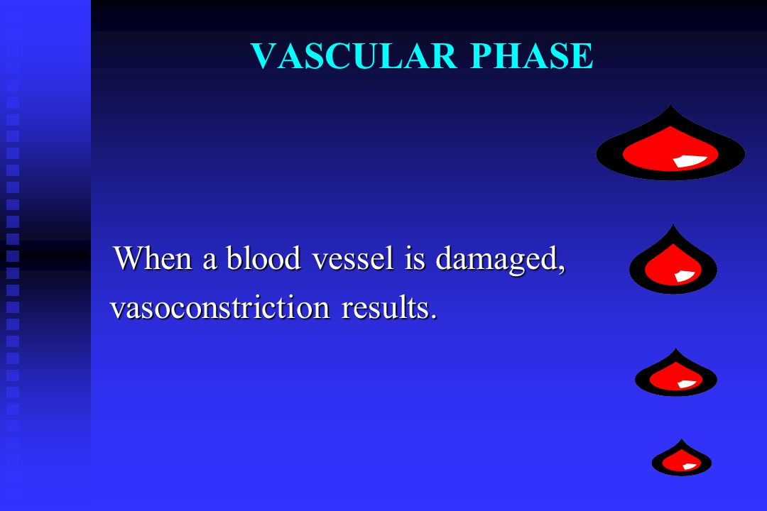 VASCULAR PHASE When a blood vessel is damaged, When a blood vessel is damaged, vasoconstriction results. vasoconstriction results.