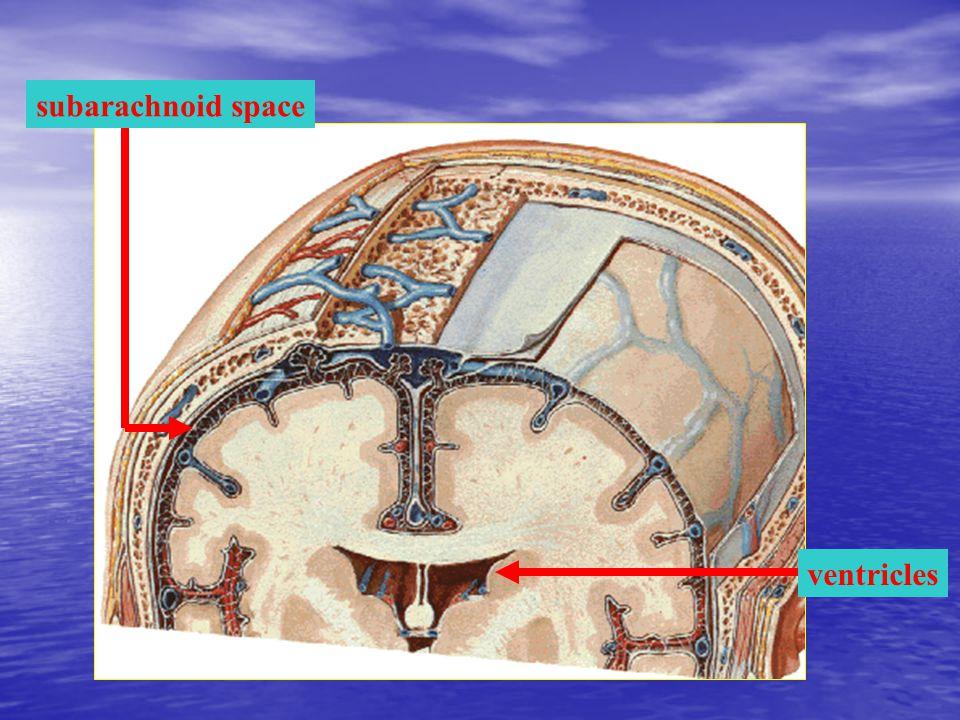 subarachnoid space ventricles