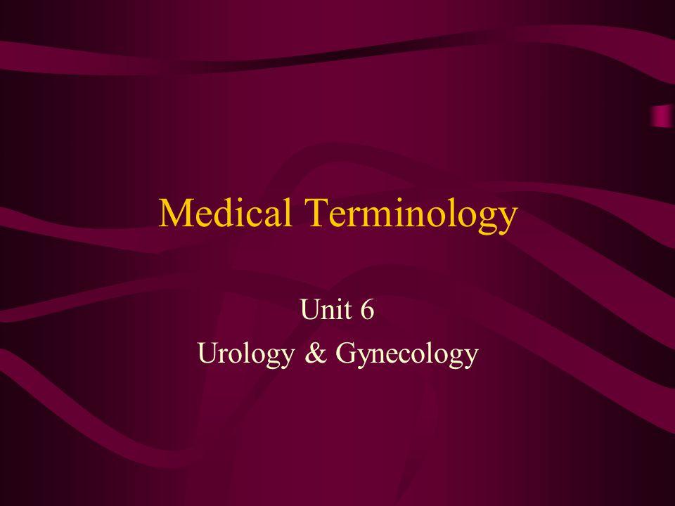 New Combining Forms Urine Kidney Renal Pelvis Ureter Bladder Urethra Ur/o Nephr/o, Ren/o Pyel/o Ureter/o Cyst/o Urethr/o