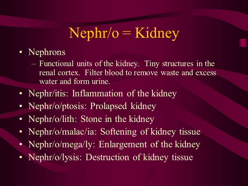 Ren/o = Kidney Ren/al: Pertaining to the kidney Ren/o/pathy: Any kidney disease Ren/o/gram: Record from an X-ray of the kidney Ren/o/intestinal: Pertaining to the kidney and intestine Ren/o/gastric: Pertaining to the kidney and stomach
