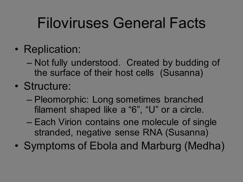 Filoviruses General Facts Replication: –Not fully understood.