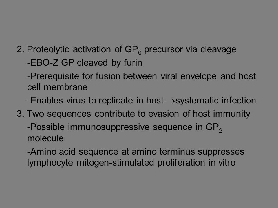 2. Proteolytic activation of GP 0 precursor via cleavage -EBO-Z GP cleaved by furin -Prerequisite for fusion between viral envelope and host cell memb