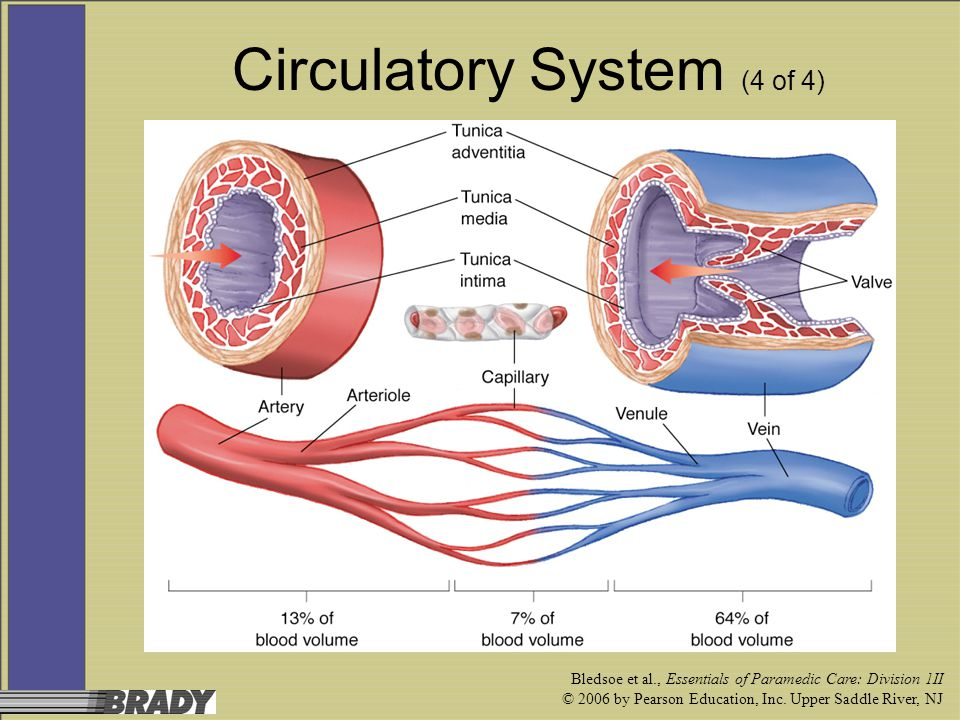 Bledsoe et al., Essentials of Paramedic Care: Division 1II © 2006 by Pearson Education, Inc. Upper Saddle River, NJ Circulatory System (4 of 4)