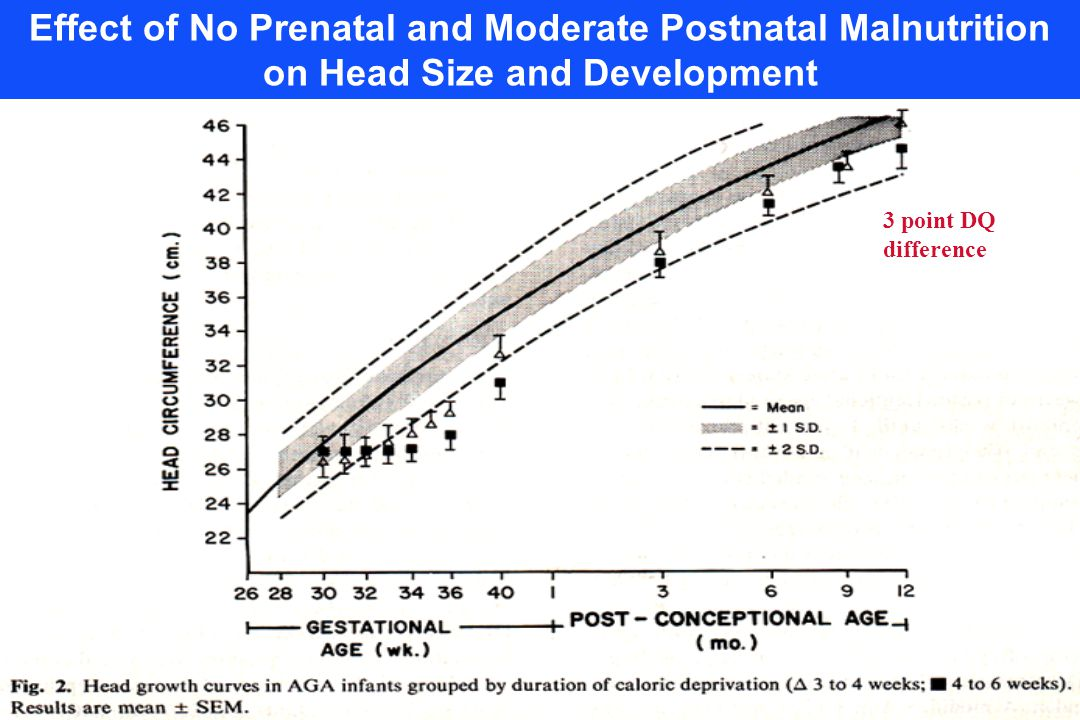 3 point DQ difference Effect of No Prenatal and Moderate Postnatal Malnutrition on Head Size and Development