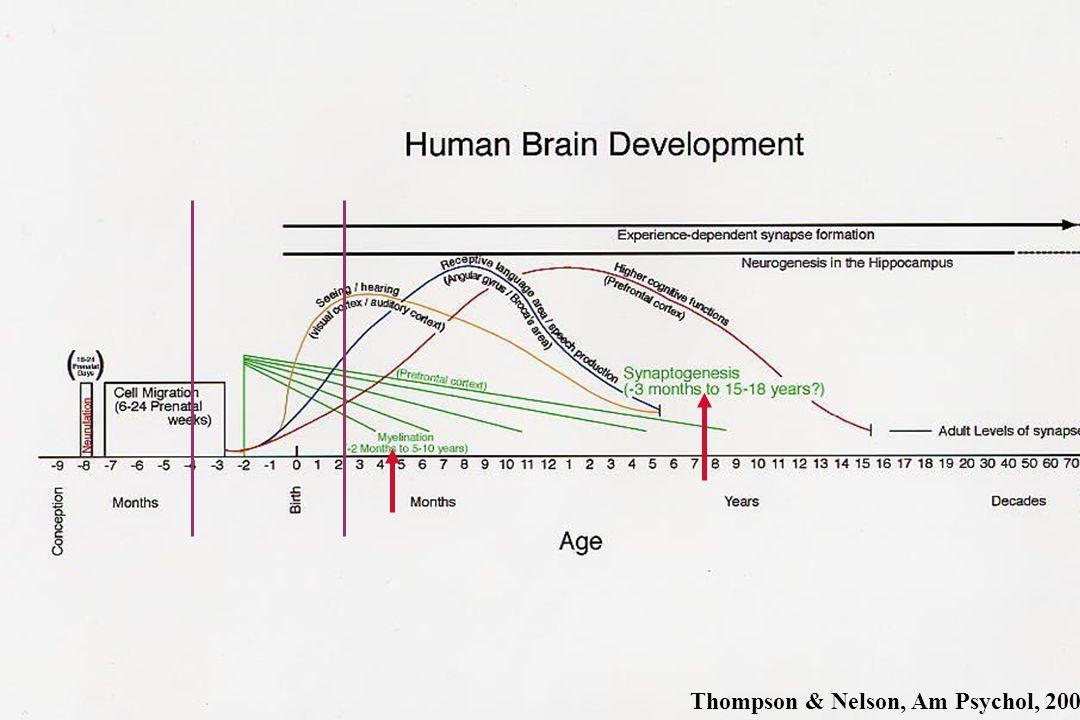 Thompson & Nelson, Am Psychol, 2001