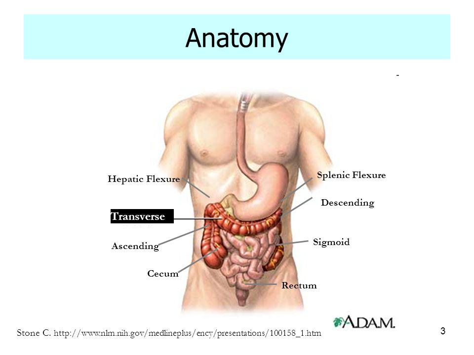 3 Anatomy Stone C. http://www.nlm.nih.gov/medlineplus/ency/presentations/100158_1.htm Ascending Cecum Descending Sigmoid Rectum Splenic Flexure Hepati