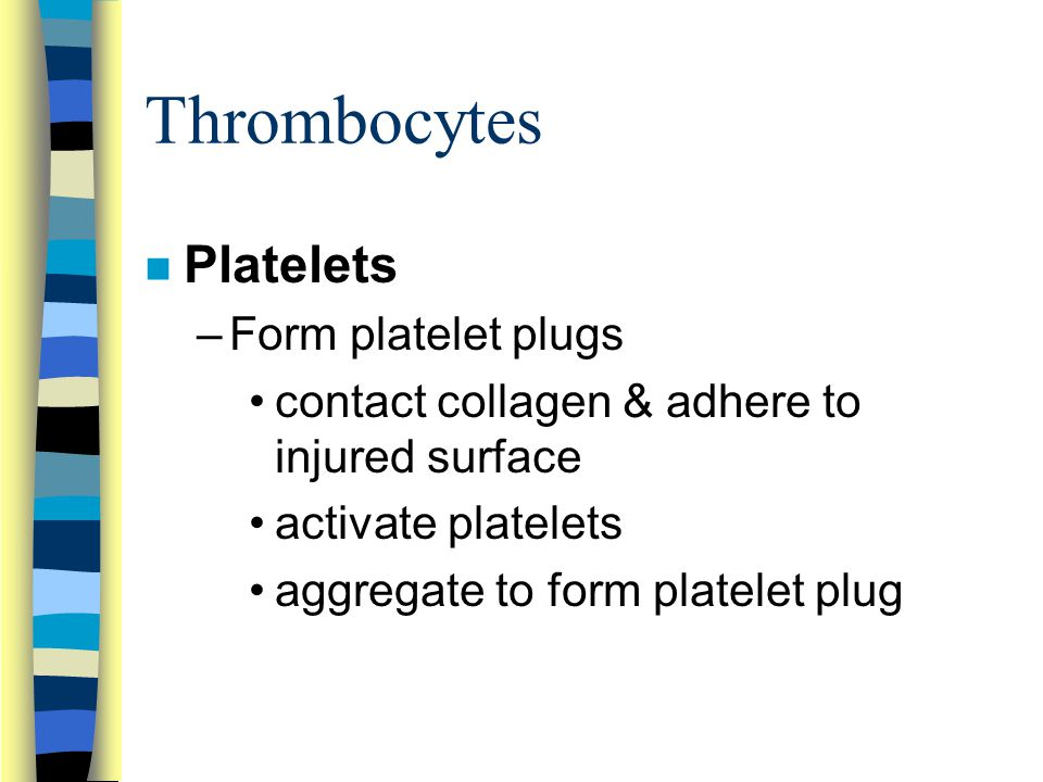 Thrombocytes n Platelets –Form platelet plugs contact collagen & adhere to injured surface activate platelets aggregate to form platelet plug