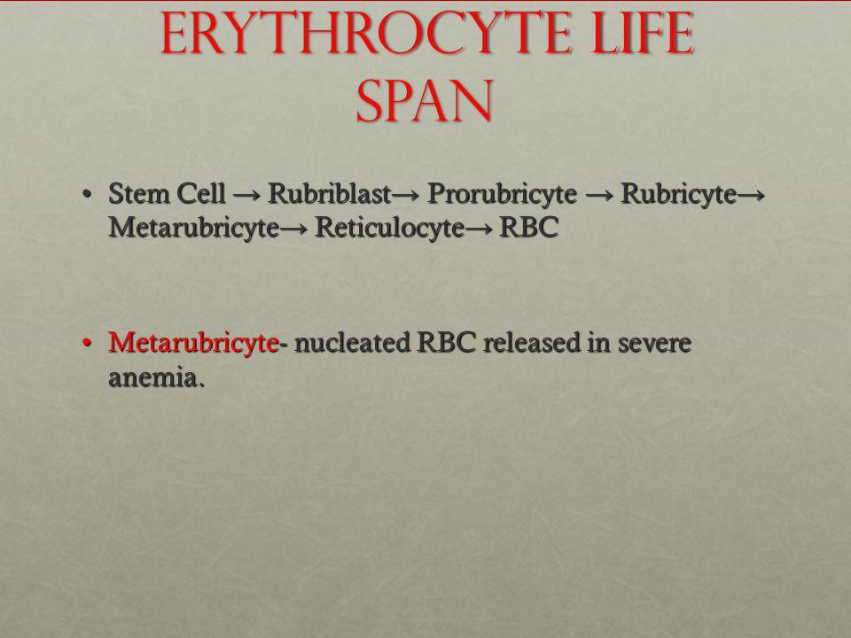Erythrocyte Life Span Stem Cell → Rubriblast → Prorubricyte → Rubricyte → Metarubricyte → Reticulocyte → RBCStem Cell → Rubriblast → Prorubricyte → Rubricyte → Metarubricyte → Reticulocyte → RBC Metarubricyte- nucleated RBC released in severe anemia.Metarubricyte- nucleated RBC released in severe anemia.