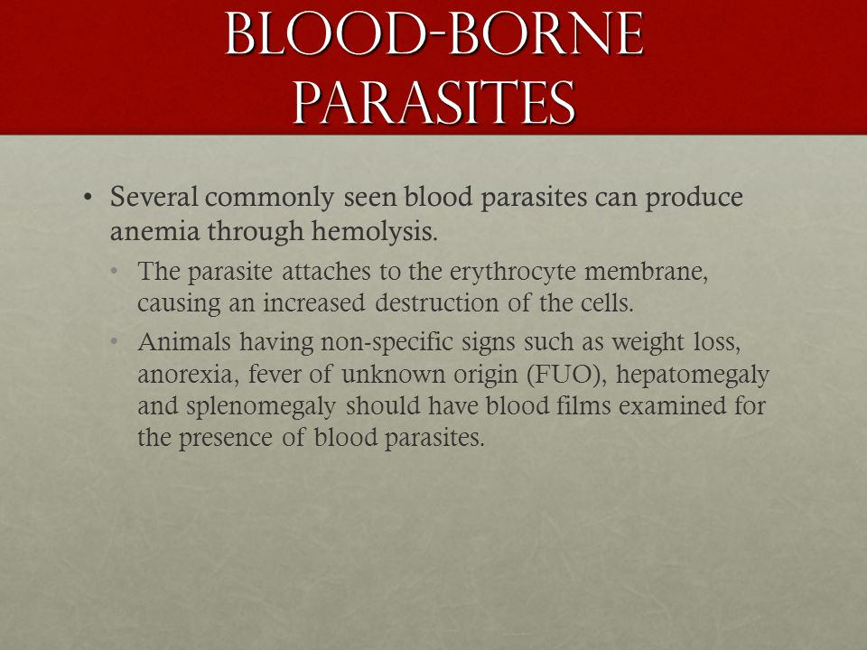 Blood-Borne Parasites Several commonly seen blood parasites can produce anemia through hemolysis. The parasite attaches to the erythrocyte membrane, c