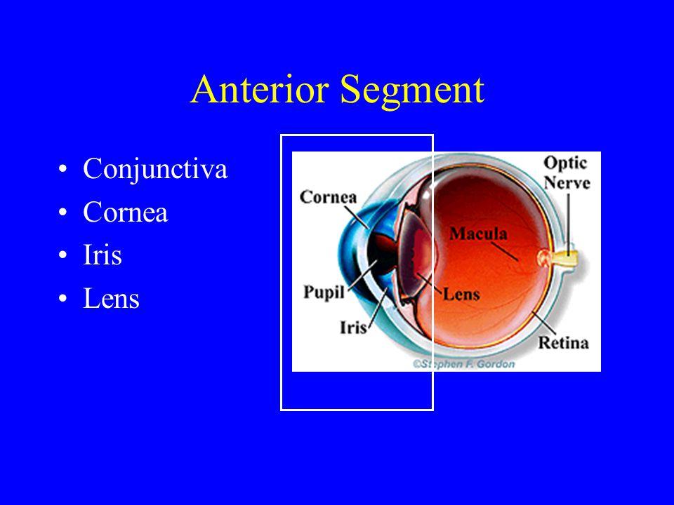 Anterior Segment Conjunctiva Cornea Iris Lens