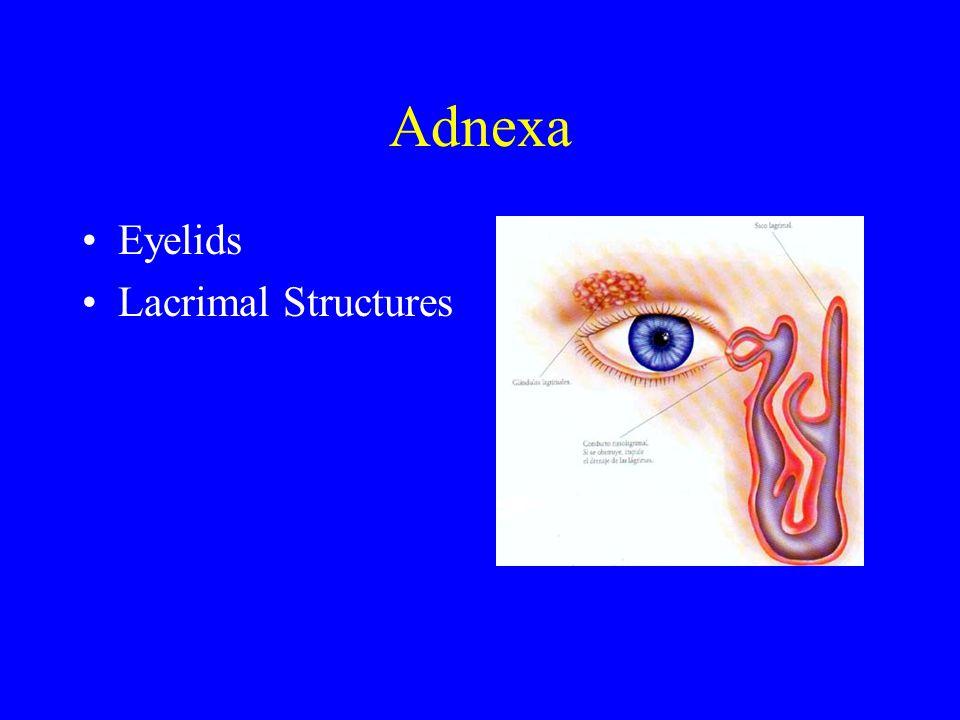 Adnexa Eyelids Lacrimal Structures