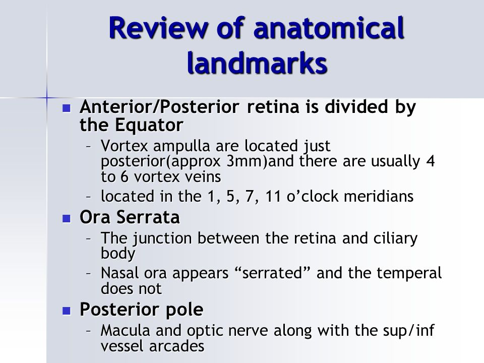 Review of anatomical landmarks Anterior/Posterior retina is divided by the Equator Anterior/Posterior retina is divided by the Equator –Vortex ampulla are located just posterior(approx 3mm)and there are usually 4 to 6 vortex veins –located in the 1, 5, 7, 11 o'clock meridians Ora Serrata Ora Serrata –The junction between the retina and ciliary body –Nasal ora appears serrated and the temperal does not Posterior pole Posterior pole –Macula and optic nerve along with the sup/inf vessel arcades