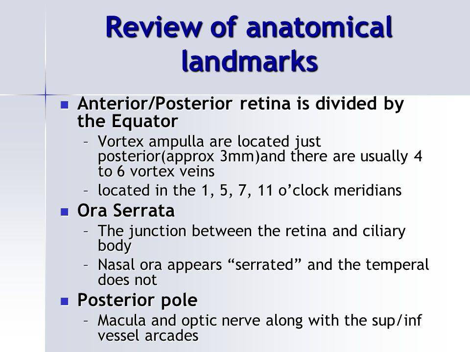 Ora Serrata Nasal or Temperal retina? Nasal or Temperal retina?