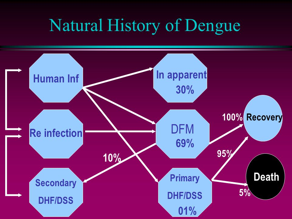 Natural History of Dengue Human Inf In apparent DFM Primary DHF/DSS 30% 69% 01% Re infection Secondary DHF/DSS 10% Recovery100% Death 5% 95%