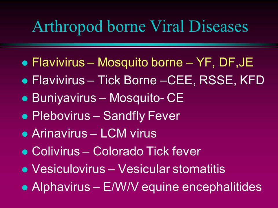 Arthropod borne Viral Diseases l Flavivirus – Mosquito borne – YF, DF,JE l Flavivirus – Tick Borne –CEE, RSSE, KFD l Buniyavirus – Mosquito- CE l Plebovirus – Sandfly Fever l Arinavirus – LCM virus l Colivirus – Colorado Tick fever l Vesiculovirus – Vesicular stomatitis l Alphavirus – E/W/V equine encephalitides