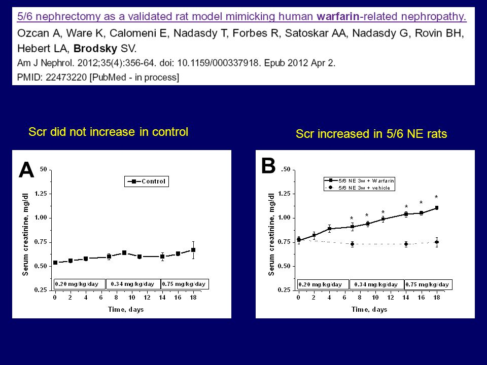 A B Scr did not increase in control Scr increased in 5/6 NE rats