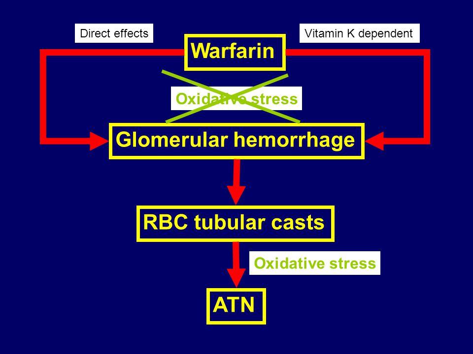 Warfarin Glomerular hemorrhage RBC tubular casts ATN Direct effects Oxidative stress Vitamin K dependent