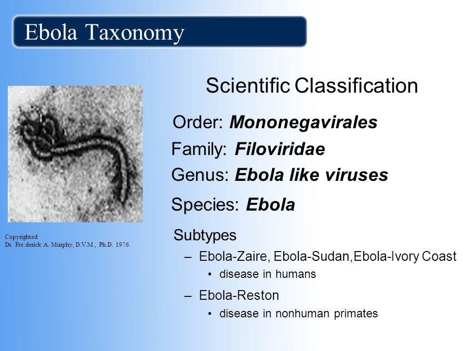 Ebola Taxonomy Scientific Classification Order: Mononegavirales Family: Filoviridae Genus: Ebola like viruses Species: Ebola Subtypes –Ebola-Zaire, Eb