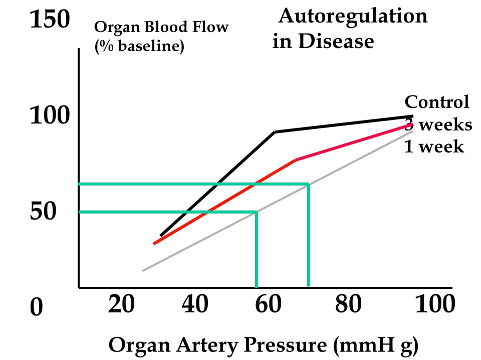 20 40 60 80 100 Organ Artery Pressure (mmH g) Organ Blood Flow (% baseline) 150 100 50 0 Autoregulation in Disease Control 3 weeks 1 week