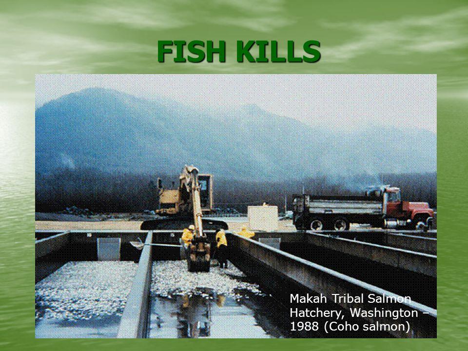 FISH KILLS FISH KILLS Makah Tribal Salmon Hatchery, Washington – 1988 (Coho salmon)