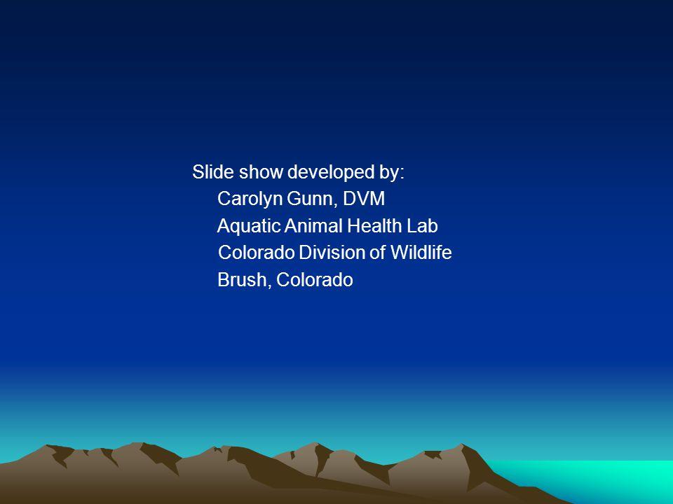 Slide show developed by: Carolyn Gunn, DVM Aquatic Animal Health Lab Colorado Division of Wildlife Brush, Colorado