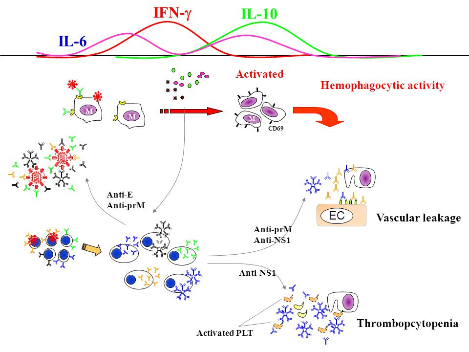 IL-6 IFN-  IL-10 Vascular leakage Activated PLT CD69 M Anti-E Anti-prM Anti-NS1 M M Activated Anti-prM Anti-NS1 EC Thrombopcytopenia Hemophagocytic a