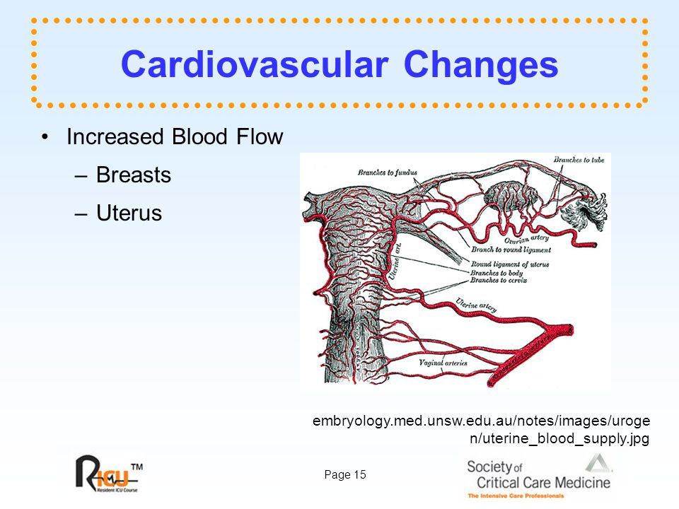 Page 15 Cardiovascular Changes Increased Blood Flow –Breasts –Uterus embryology.med.unsw.edu.au/notes/images/uroge n/uterine_blood_supply.jpg