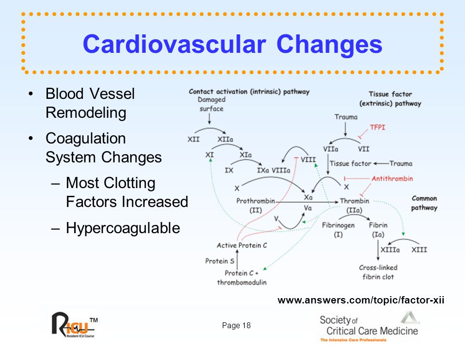 Page 18 Cardiovascular Changes Blood Vessel Remodeling Coagulation System Changes –Most Clotting Factors Increased –Hypercoagulable www.answers.com/topic/factor-xii