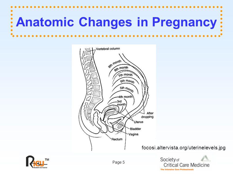 Page 5 Anatomic Changes in Pregnancy focosi.altervista.org/uterinelevels.jpg