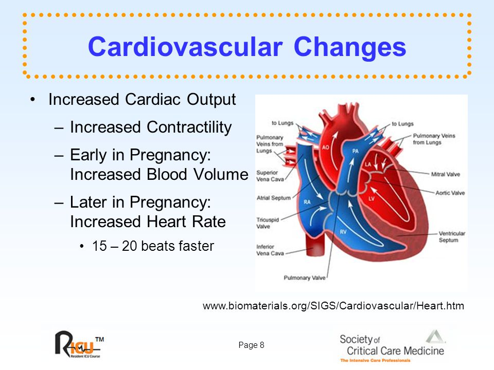 Page 8 Cardiovascular Changes Increased Cardiac Output –Increased Contractility –Early in Pregnancy: Increased Blood Volume –Later in Pregnancy: Increased Heart Rate 15 – 20 beats faster www.biomaterials.org/SIGS/Cardiovascular/Heart.htm