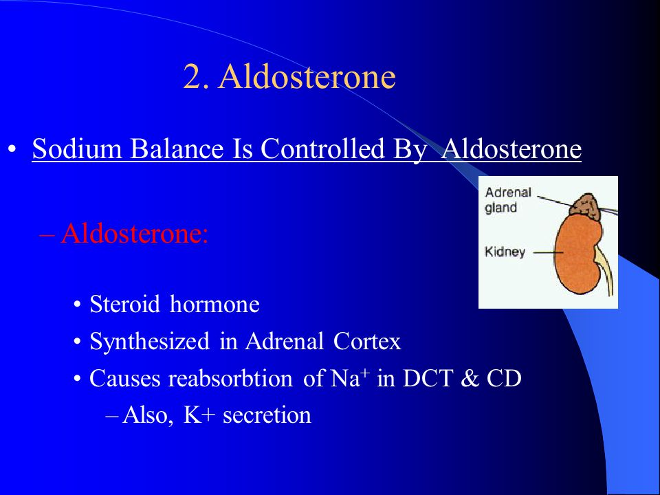 Secretion of ADH Increased osmolarity ADH Post. Pituitary Urge to drink STIMULUS cAMP +