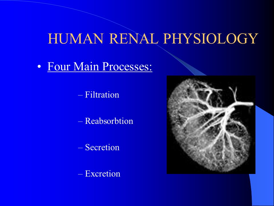 Functions of the Nephron Filtration Reabsorption Secretion Excretion
