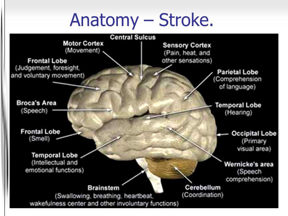 Anatomy – Stroke.