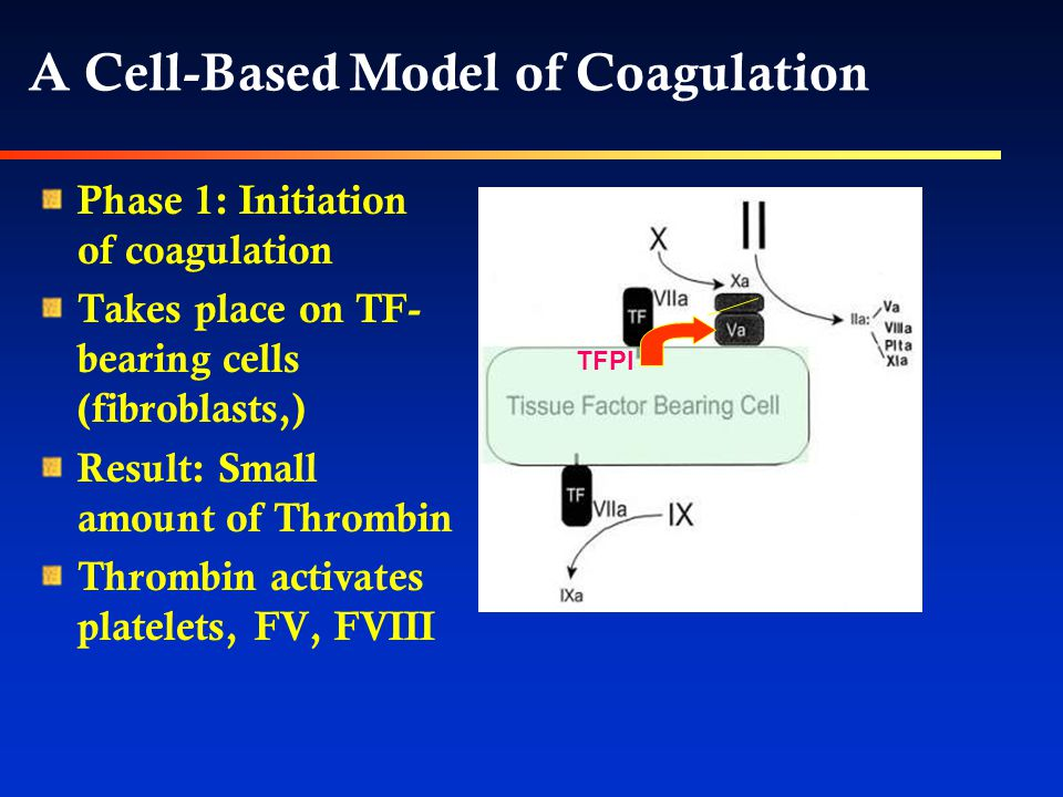 A Cell-Based Model of Coagulation Phase 1: Initiation of coagulation Takes place on TF- bearing cells (fibroblasts,) Result: Small amount of Thrombin Thrombin activates platelets, FV, FVIII TFPI