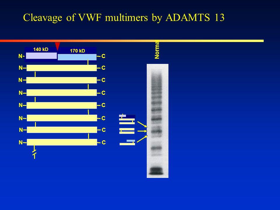 SDS-agarose gel monomer NC VWF multimerization CN dimer NC NC multimers NC NC >40,000 kD 600 kD NC NC