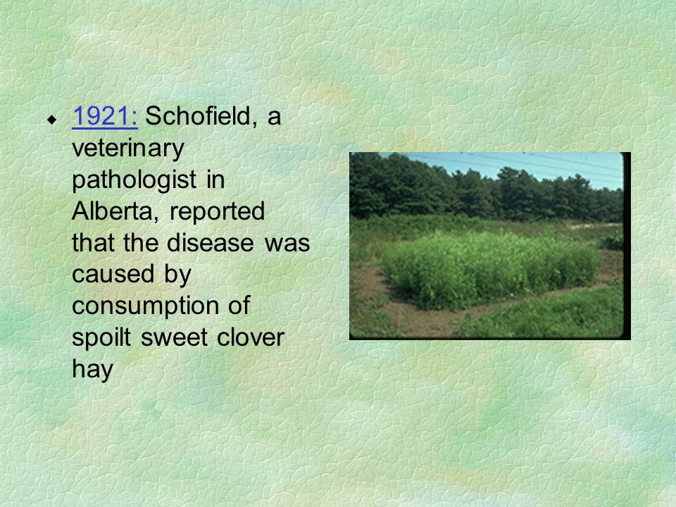 u 1921: Schofield, a veterinary pathologist in Alberta, reported that the disease was caused by consumption of spoilt sweet clover hay