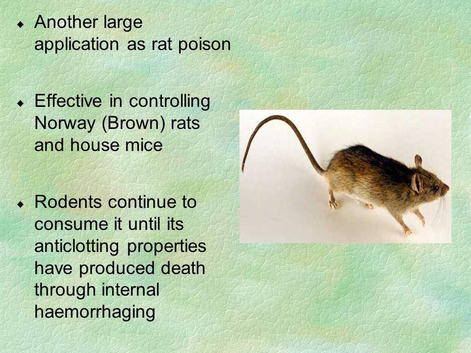 u Another large application as rat poison u Effective in controlling Norway (Brown) rats and house mice u Rodents continue to consume it until its ant