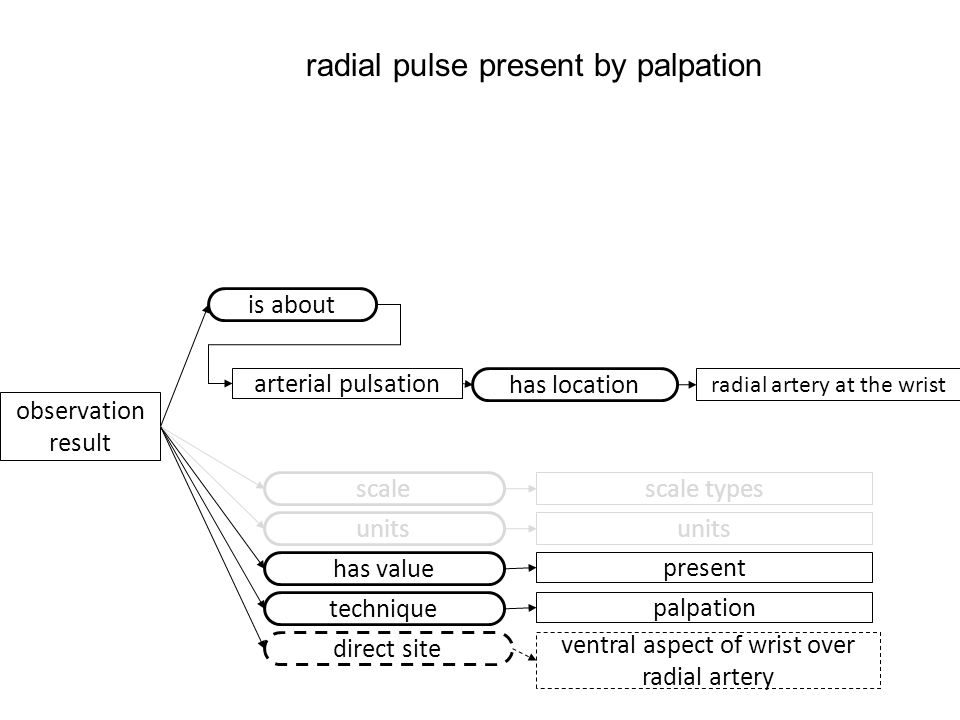 observation result scale scale types has value present units technique palpation direct site ventral aspect of wrist over radial artery radial pulse present by palpation arterial pulsation is about has location radial artery at the wrist